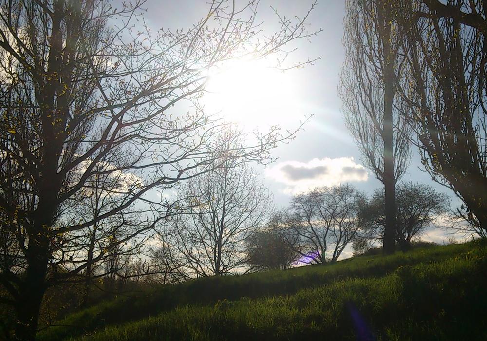 Sonne bricht durch Bäume