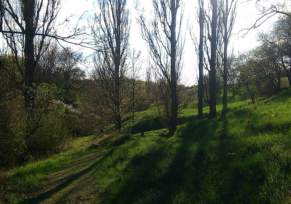 Schattenwerfende Baumreihe